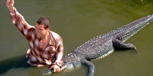 How to survive an alligator attack