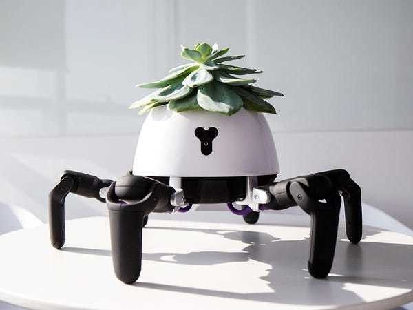 This little robot moves in and out of the sun to care for a plant that lives on its back - Business Insider