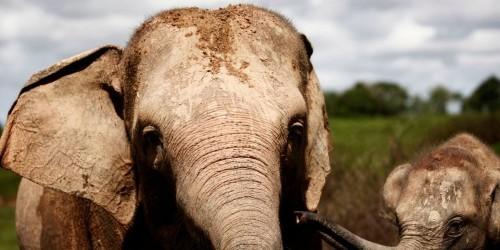 Botswana lifts elephant hunting ban, says growth harmed farmers