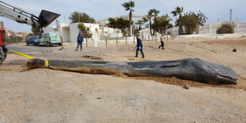 A desperately thin whale washed up dead on a beach with 29 kg of human trash in its stomach