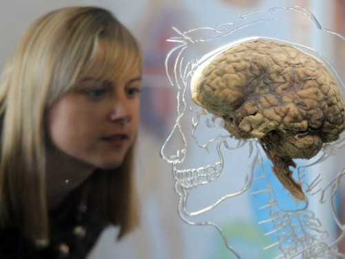 This cutting-edge research is a huge step in the war against the dangerous mysteries of the brain