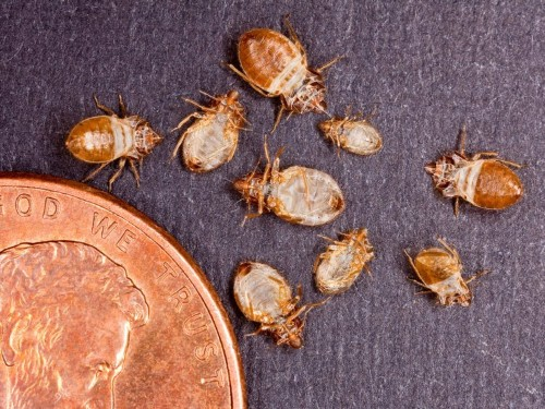 17 surprising ways you can bring bed bugs into your home