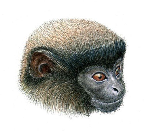 It's a titi! New monkey species found in Peru