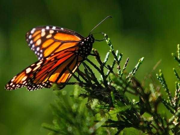 The world's biodiversity has fallen below a 'safe' level - Business Insider