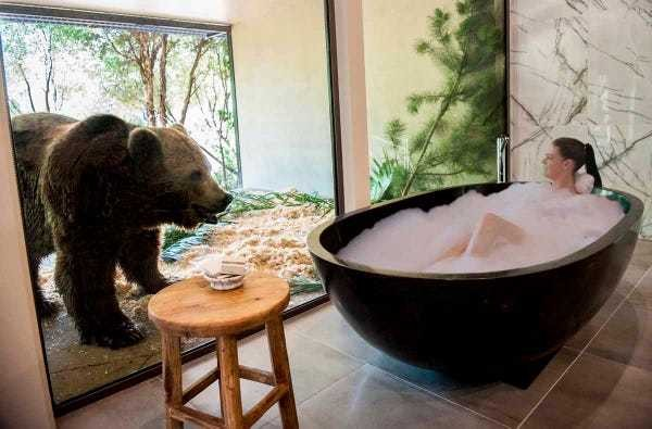 A new hotel in Australia lets you dine with lions and take a bath next to bears - Business Insider