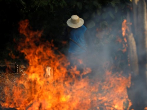 99% of the fires in the Amazon rainforest were started by humans