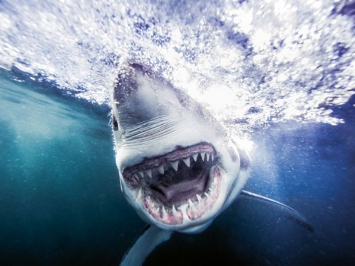 A photographer swam with sharks for 10 years to capture these stunning photos