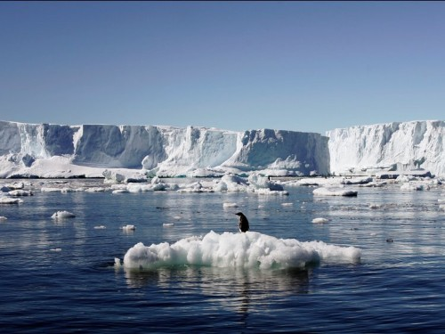 150,000 Antarctic penguins died after a massive iceberg grounding