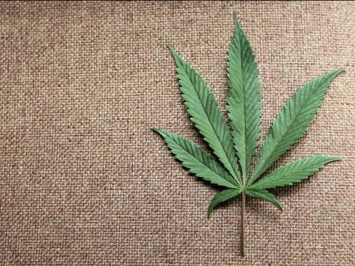 A powerful drug derived from marijuana could drastically change our perception of pot