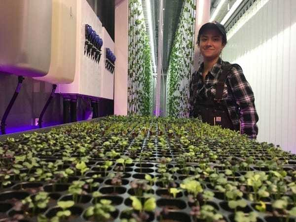 The US government is loaning millions of dollars to jumpstart urban farming - Business Insider