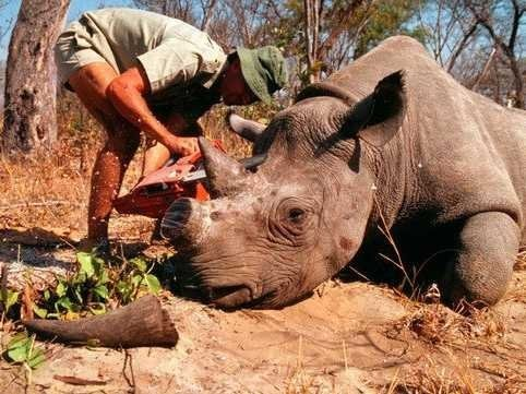 Hunting Permit For Endangered Rhino Sells For $350,000 In Dallas