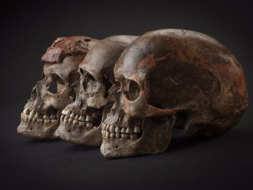 A study of ancient DNA has revealed the ancestry of modern Europeans