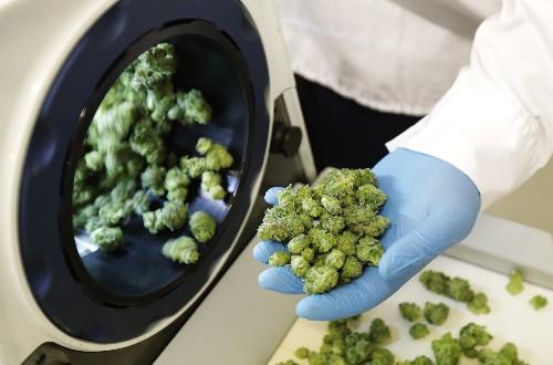 The marijuana producer Aurora Cannabis jumps after posting huge growth (ACB)