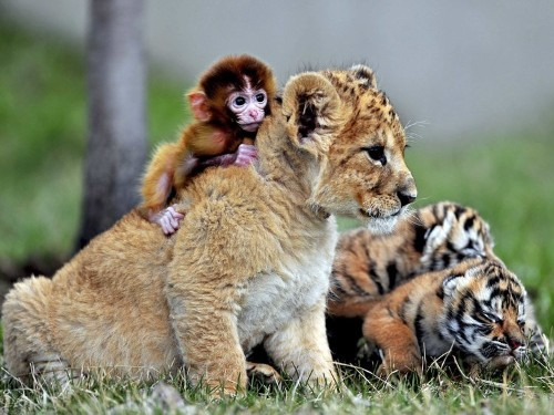19 unlikely animals who became best friends