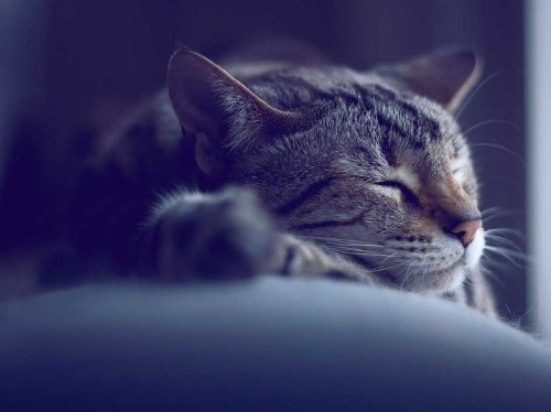 Why Some People Respond To Stressful Situations By Just Going To Sleep