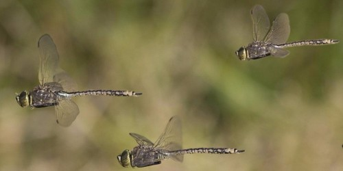 A 27-year study found the amount of insects flying in the air has declined 75% — but no one knows why