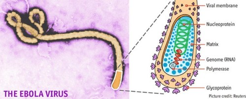 Portrait of a virus: A killer in close up