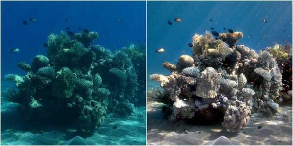 Scientists made an algorithm called 'Sea-thru' that can transform underwater photos to r... - Business Insider