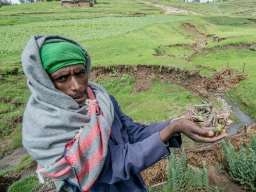 Ethiopia is experiencing one of the worst droughts in 50 years — but farmers found an astonishing way to make the desert bloom again