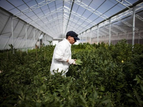 WEED STARTUPS: High Times Magazine Is Launching A Private Equity Fund For Marijuana Businesses