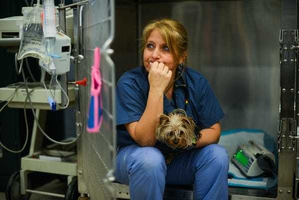 Welcome to the special hospital where pets are treated better than most human patients - Business Insider