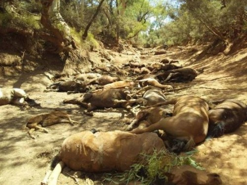 Dozens of wild horses were found dead at a dried-up waterhole in Australia as the region continues to suffer from a record-breaking heatwave
