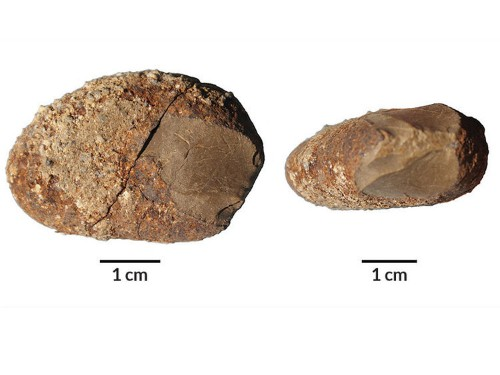 Scientist have discovered new clues about the earliest known Americans