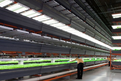 High-Tech Farming: The Light Fantastic