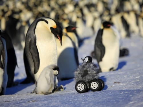 Scientists Created The Cutest Trojan Chick To Study The 'Notoriously Shy' Emperor Penguins