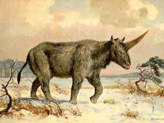 Scientists may have discovered the fossilized skull of a 'Siberian unicorn'