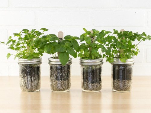 This kit is the perfect solution for anyone who wants an herb garden but doesn't have enough space