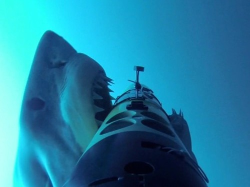 Great white sharks attacked an underwater drone recording their behavior — and it helped biologists learn remarkable new information