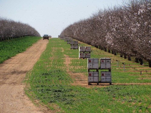 The amount of water it takes to grow almonds in California is just bananas