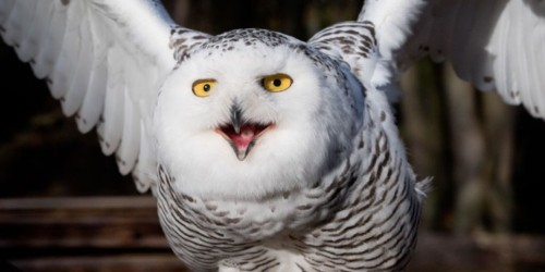 Russia's new drone looks like a snowy owl, and it has a deadly purpose