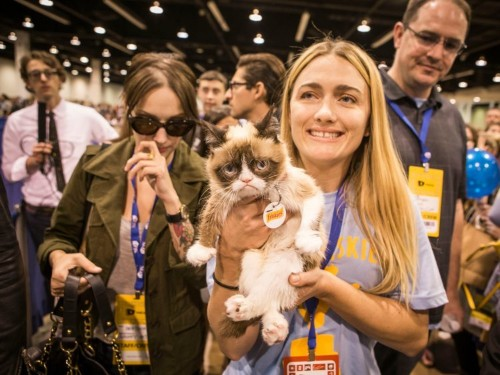 How Grumpy Cat's owner created a viral sensation and made millions