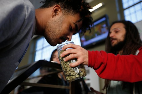 The price of pot is tumbling in Colorado