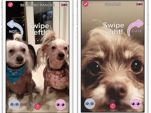 BuzzFeed just launched its second app — and it's like a Tinder for pictures of people's adorable pets