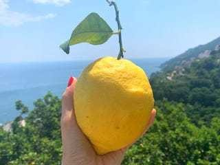 How traditional Limoncello is made in Italy - Business Insider
