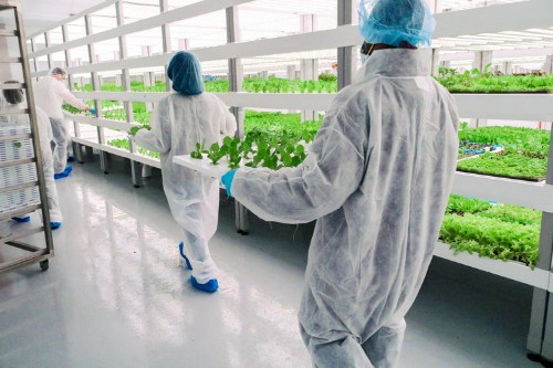 Las Vegas has a new $30 million vertical farm that produces over a million pounds of produce every year — take a look