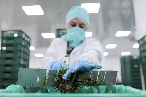 Goldman Sachs, Citigroup, JPMorgan opening their doors to cannabis - Business Insider