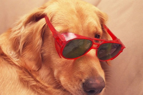 11 Scientific Reasons Dogs Are Better Than Cats