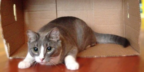 Here's Why Cats Are Obsessed With Boxes