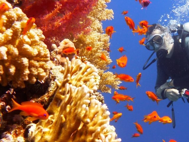 The Great Barrier Reef is at a critical tipping point and could disappear by 2050 - Business Insider