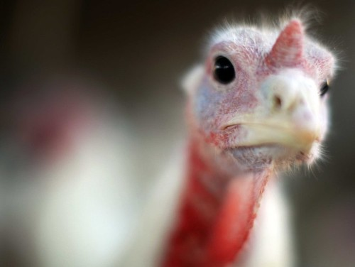 11 things you probably didn't know about Thanksgiving
