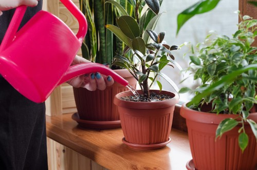 An indoor plant expert reveals a simple trick to keep your houseplants from dying