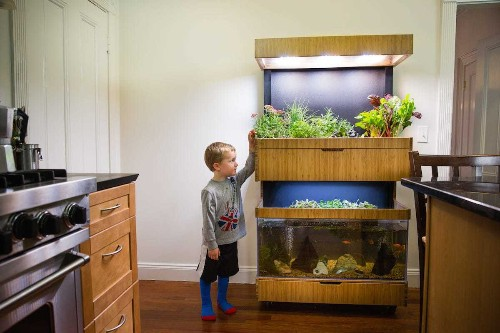 Grove lets you grow food at home - Business Insider