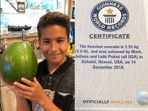 Hawaii family wins Guinness World Record for world's heaviest avocado - Business Insider