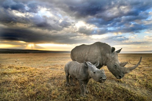 Poacher hunters fighting illegal rhino trade say this is a war
