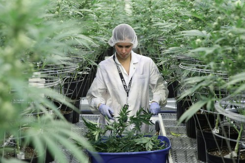 Silver Spike Capital just raised $250 million for cannabis fund