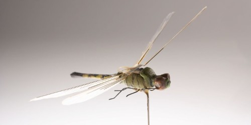 Nearly 9 out of 10 flying insects in hospitals carry potentially harmful bacteria, a new study finds